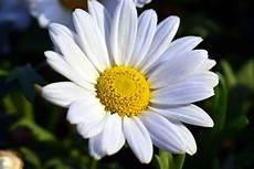 ca fiore foto gratis fiore giardino estate natura flora