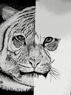 Gambar Menggambar Harimau Wikihow Gambar Pensil Di Rebanas