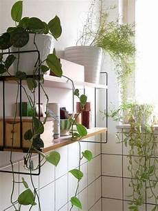 plante verte pour salle de bain des plantes vertes dans la salle de bain frenchy fancy