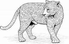 ausmalbild jaguar tier malvorlagentv