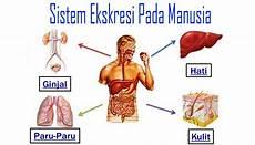 Mekanisme Sistem Ekskresi Pada Manusia Nusa Caraka