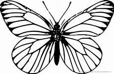 ausmalbilder k 228 fer schmetterlinge insekten