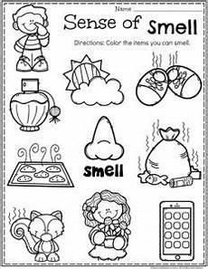 the five senses worksheets 12571 5 senses five senses preschool 5 senses worksheet 5 senses preschool
