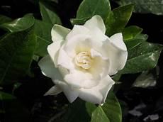 piante da appartamento con fiori bianchi jordana e leandro significado das plantas