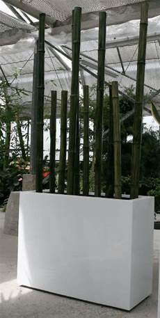 dekoration mit bambus galerie gr 252 ner 228 ume raumbegr 252 nung