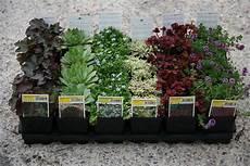 piante da terrazzo perenni piante aromatiche balcone piante aromatiche uc with