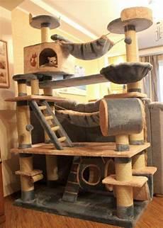 maison pour chaton