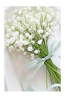 mughetto significato dei fiori il linguaggio dei fiori ed il loro significato infoperte