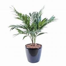 pot pour palmier exterieur palmier artificiel parlour 65 cm de hauteur et 55 cm de