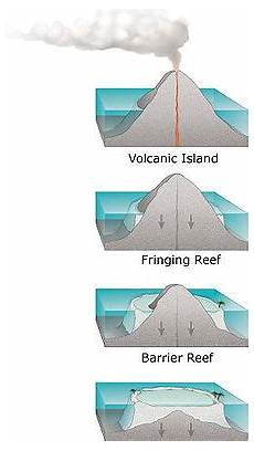 the structure and distribution of coral reefs wikipedia
