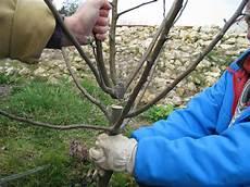 La Taille De Formation Des Arbres Fruitiers Simple