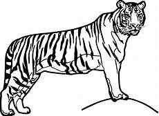 waiting big tiger coloring page wecoloringpage