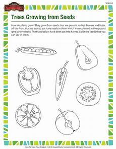 worksheets plants and seeds 13503 saying for planting seeds for resources just b cause