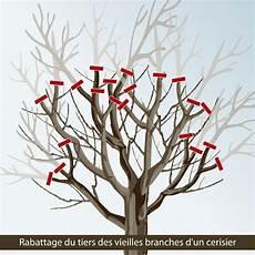 Prix Elagage Cerisier Elaguer Un Cerisier Elagage D 39 Un Cerisier Elaguer Un