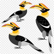 Burung Burung Enggang Rangkong Papan Gambar Png