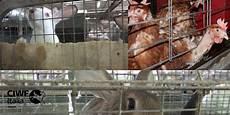 animali in gabbia compassion