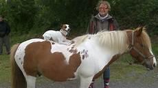 ffe trouver un cheval les 233 curies de patt un coucou des chevaux