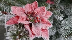 frohe weihnachten merry joyeux noel foto