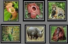Ragam Hewan Dan Tumbuhan Langka Di Indonesia Yang