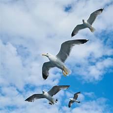 Gambar Burung Terbang Di Awan Gambar Burung