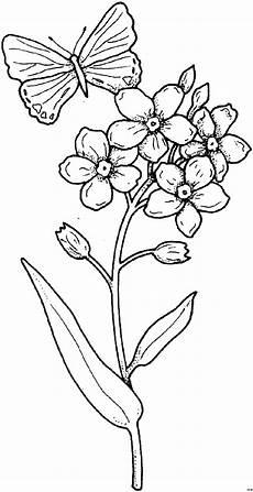 Malvorlage Schmetterling Mit Blume Schmetterling Mit Blume Ausmalbild Malvorlage Blumen