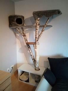 Kratzbaum Selber Bauen Natur - kratzbaum aus einer birke alles f 252 r die katz
