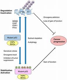 how does p53 prevent cancer cells from forming cancers special issue p53 signaling in cancers