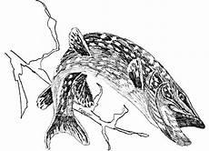 file northern pike fish esox lucius linnaeus line line