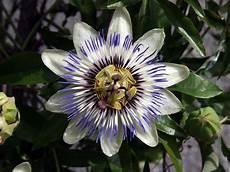 Malvorlage Exotische Blumen Exotische Blumen Kostenlose Bilder