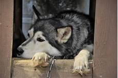 spa mulhouse chien la spa r 233 clame l interdiction de la vente de chiens et de