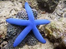 Ekogeo Bintang Laut Invertebrata Unik Di Dasar Laut