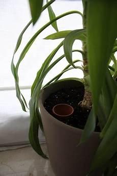 zimmerpflanzen im urlaub bewässern im urlaub pflanzen bew 228 ssern tipps