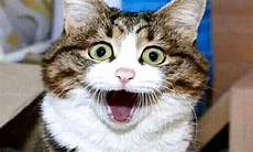 Kumpulan Gambar Kucing Lucu Imut Dan Menggemaskan Toko