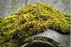 mousse sur le toit le toit d ardoise est couvert de la mousse verte image