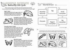 life cycle of a butterfly worksheets for 2nd grade the best worksheets image collection