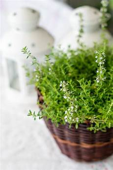 zimmerpflanzen die wenig licht brauchen