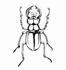 insekten 00255 gratis malvorlage in insekten tiere ausmalen