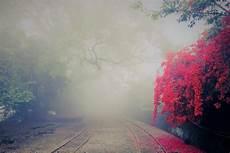 Tree Photography Backdrop