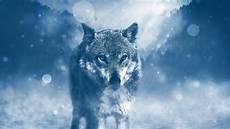 Wolf Wallpaper Blue blue wolf wallpapers hd wallpaper cave