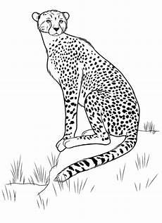 ausmalbilder gepard ausmalbilder