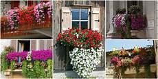 piante da davanzale fiori da balcone creare uno spazio green roba da donne