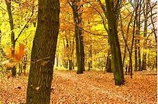 Malvorlagen Jahreszeiten Kostenlos Mp3 Vivaldi Klingelton Herbst Klassik Klingelt 246 Ne