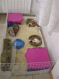 gabbia per conigli fai da te rosicchiamo tutti insieme cavie gabbia e recinto