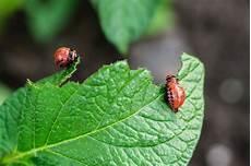 prevent common garden pests aantex