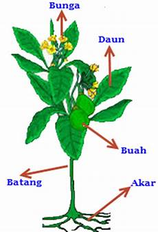 Bagian Bagian Tumbuhan Sainsducation