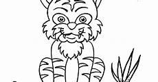 Mewarnai Binatang Harimau Contoh Gambar Mewarnai