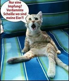 Lustige Ausmalbilder Katzen Katzen Lustige Tierzitate Tierwitze Lustige Bilder