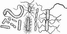 bacteria in food images goji actives diet
