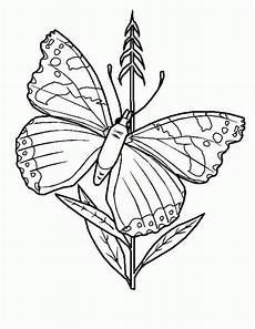 Malvorlage Schmetterling Gratis Malvorlagen Schmetterling