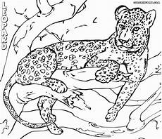 leopard coloring pages kidsuki